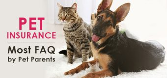 Pet Insurance – Most Frequently Asked Questions by Pet Parents