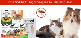 Pet Safety – Top 5 Weapons To Eliminate Fleas