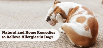 Natural and Home Remedies to Relieve Allergies in Dogs