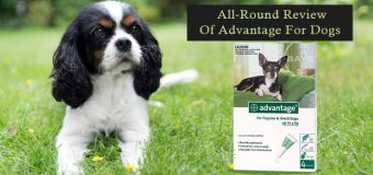 All-Round Review Of Advantage For Dogs