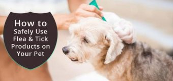 How to Safely Use Flea and Tick Products on Your Pet