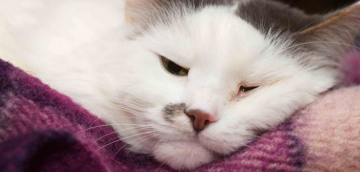 Symptoms of Skin Cancer In Cats