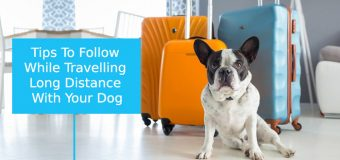 Traveling with Dogs Tips: Road Trip with Pets