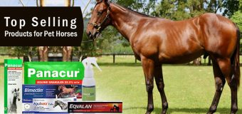 Top Selling Products for Pet Horses