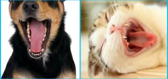 Everything You Need To Know About Oral Tumors in Pets