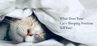 What Does Your Cat's Sleeping Position Tell You?