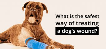 Find the Right Wound Care Products: Safest Way to Treat & Heal Dog's Wound
