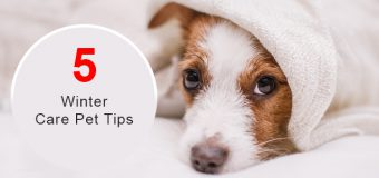 Protect Your Pet During Winter And Cold Weather