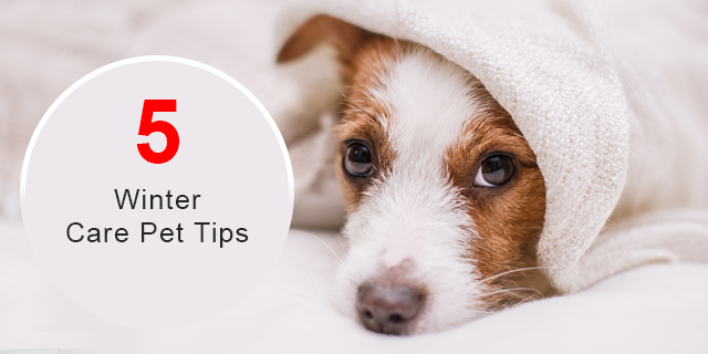 Protect Your Pet During Winter