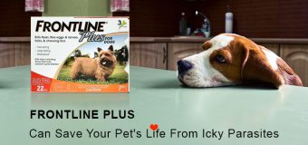 Frontline Plus Can Save Your Pet's Life From Icky Parasites