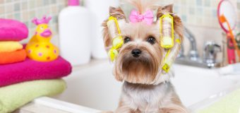 Tips To Maintain Hygiene – Pet Owners Guide