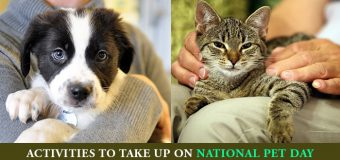 Activities To Take Up On National Pet Day