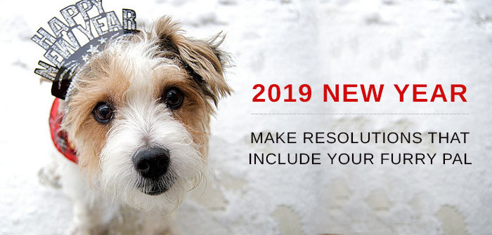 New Year Resolution for Dogs