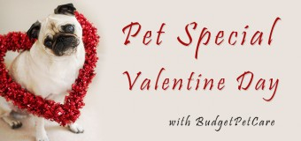 Pet Special Valentine Day This Year with BudgetPetCare