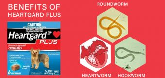 Heartworm, Roundworm and Hookworm Infestations and Benefits of Heartgard Plus