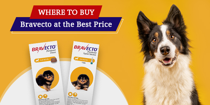 Bravecto for Dog at the Best Price