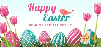 Time To Renew Your Pet's Health With Easter Discount- Grab The Best Pet Supplies And Save 6% On Your Order!
