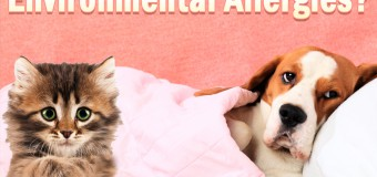 How To Help Your Pets Fight Environmental Allergies?
