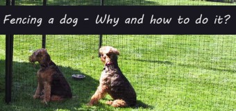 Fencing A Dog- Why And How To Do It?