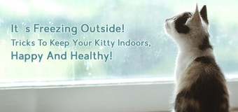 It's Freezing Outside! Tricks To Keep Your Kitty Indoors, Happy And Healthy!
