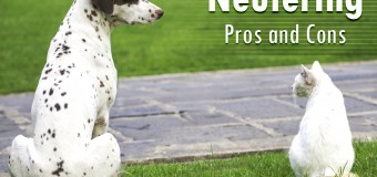 Neutering Canines And Felines- Pros And Cons