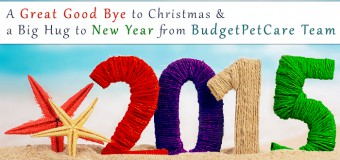 A Great Good Bye to Christmas and a Big Hug to New Year