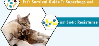 Pet's Survival Guide to Superbugs and Antibiotic Resistance