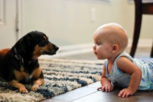 Baby Crawling with Dog