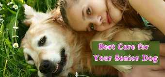 Best Care for Your Senior Dog