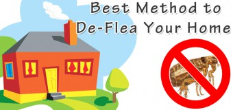 What is the Best Method to De-Flea Your Home?