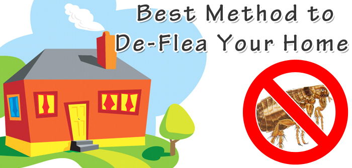 Best Method to De-Flea Your Home