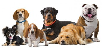 Want A Furry Friend For Your Family? Check The Top 5 Family Dog Breeds