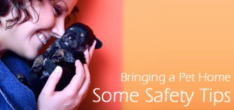 Bringing a Pet Home – Some Safety Tips