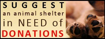 In News: BudgetPetCare Announces Pet Supplies Donation for Animal Shelters