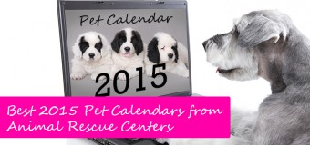 Best 2015 Pet Calendars from Animal Rescue Centers