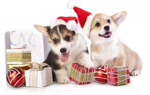 Dog Supplies For Christmas