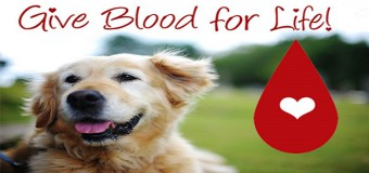 Blood Donor Dogs – Absolute Lifesavers