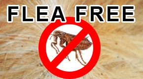 How to Get Rid of Fleas from Your Home and Pets
