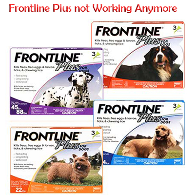 Frontline_Plus_not_Working_Anymore