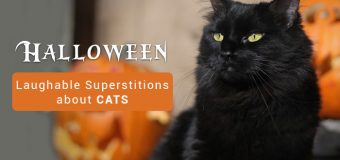 Halloween: Laughable Superstitions about Cats