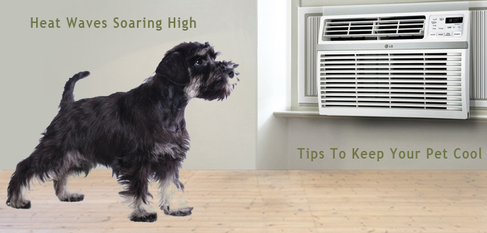Keep Your Pet Safe in A Heat Wave