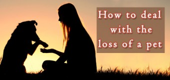 How to Deal with the Loss of a Pet?