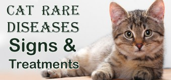 Cat Rare Diseases: Signs and Treatments