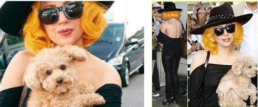 Lady Gaga with Dog