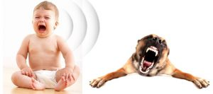 New Baby Sounds for Dogs
