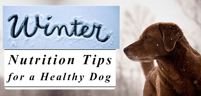 Pet Winter Care