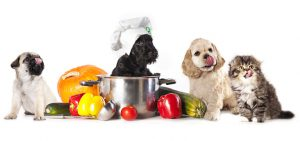 Organic Pet Food for Healthy Diet