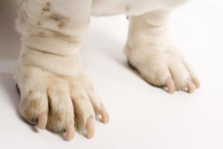 Overgrown Nails Of Dogs