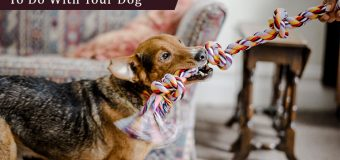 Interesting Indoor Activities To Do With Your Dog