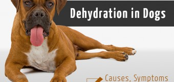 Dehydration in Dogs- Causes, Symptoms and Prevention